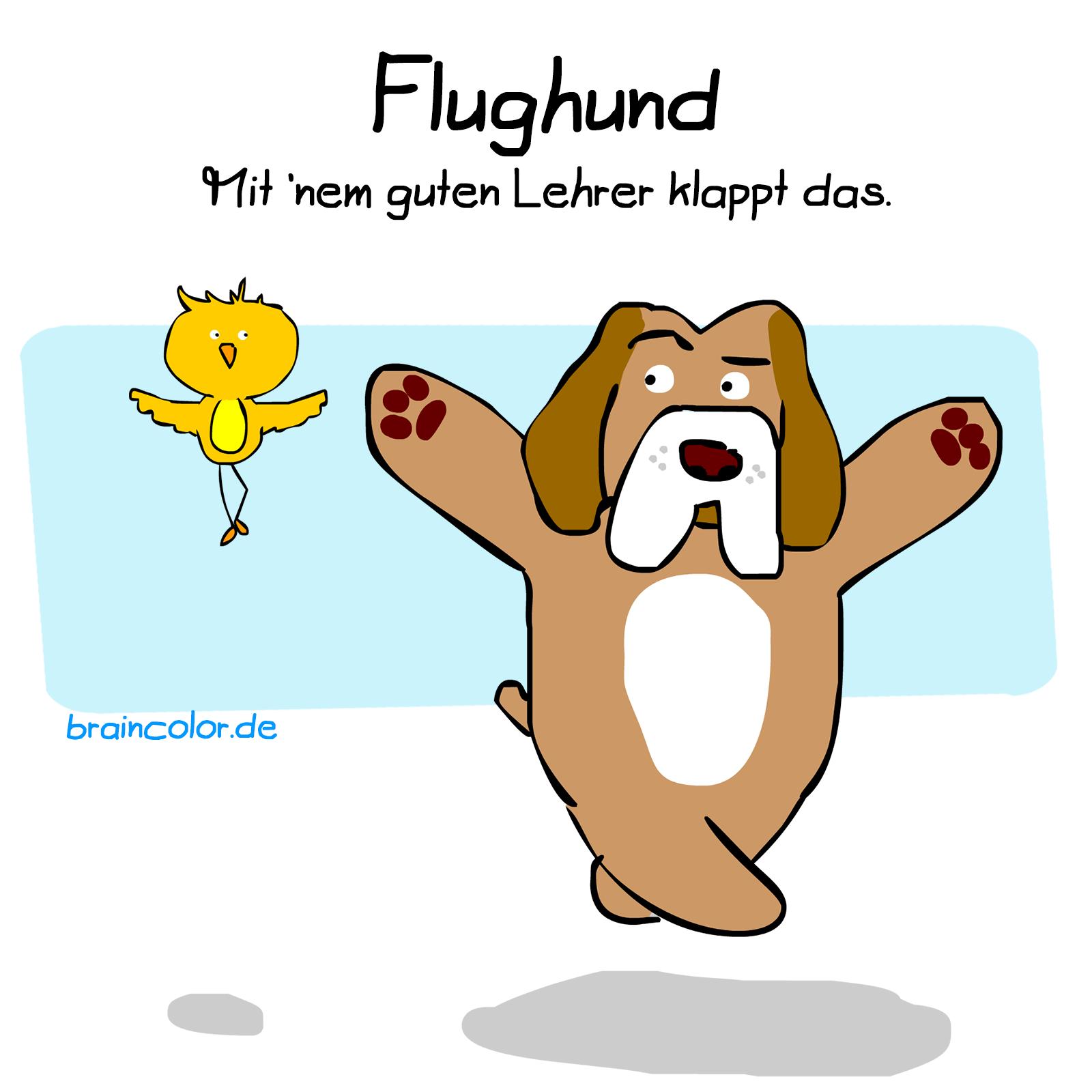 flughund